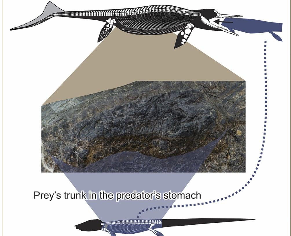Researchers Find 4m Thalattosaur In Belly Of 5m Ichthyosaur