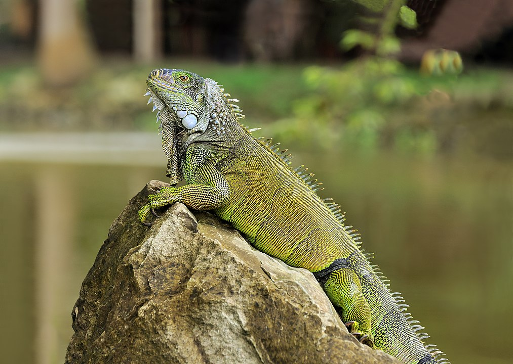 Florida Law That Restricted Certain Reptiles Ruled Unconstitutional