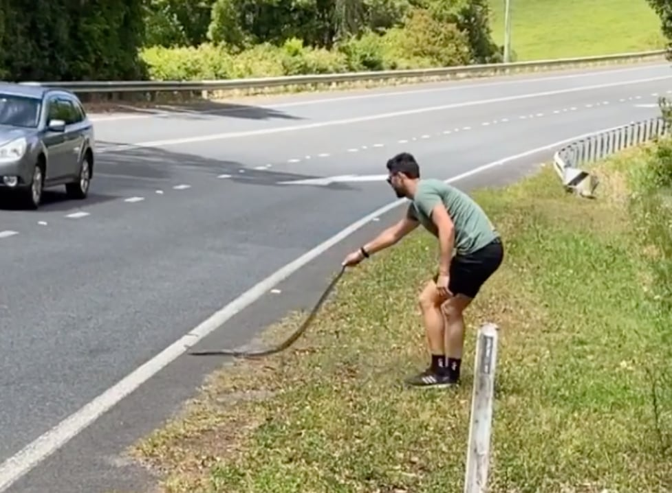 Former Aussie Pro Footballer Brent Staker Saves Carpet Python From Busy Highway