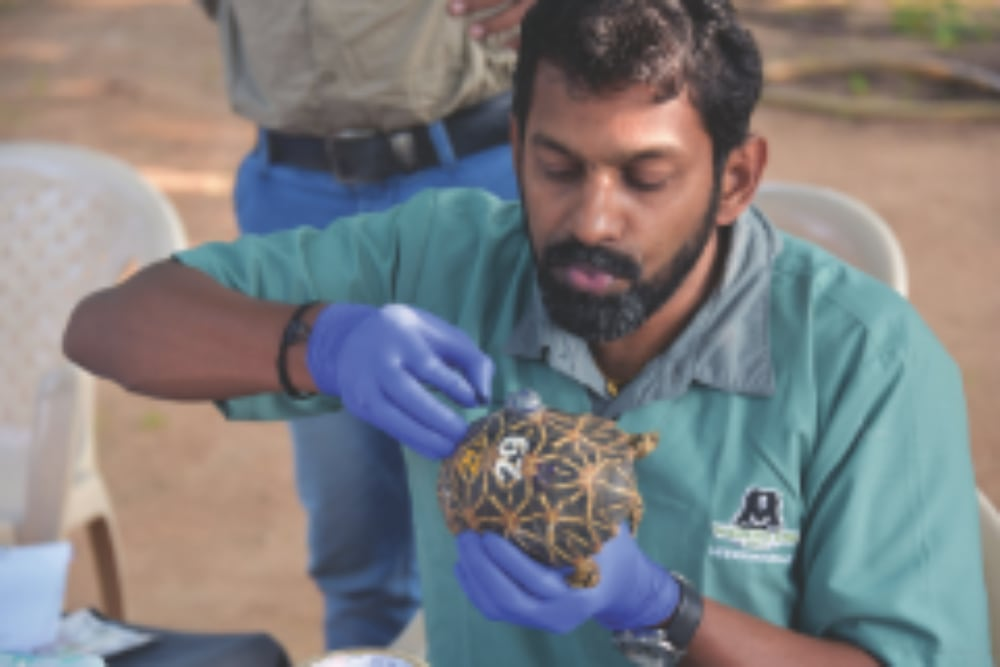 The Successful Return Of 12 Indian Star Tortoises Back Into The Wild