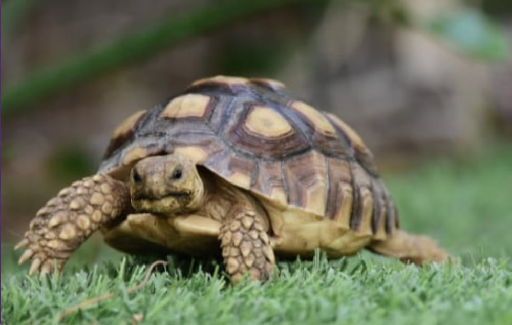 5 Key Elements of Reptile Nutrition