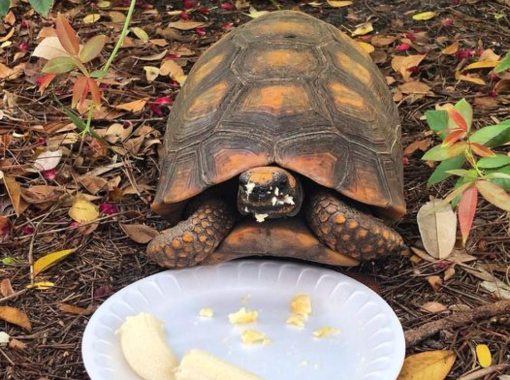 Tortoise Stolen From Florida's Riverland Nursery