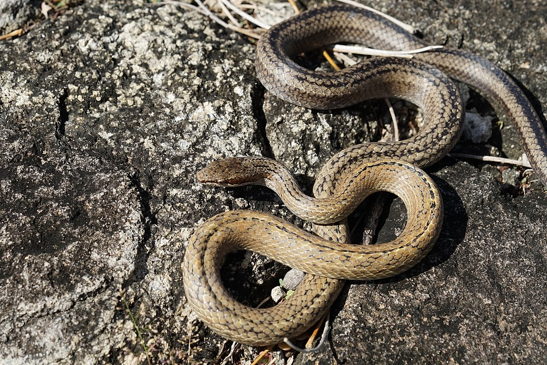 After Europeans Arrived, 1/2 of Guadeloupe Islands Snakes And Lizards Went Extinct