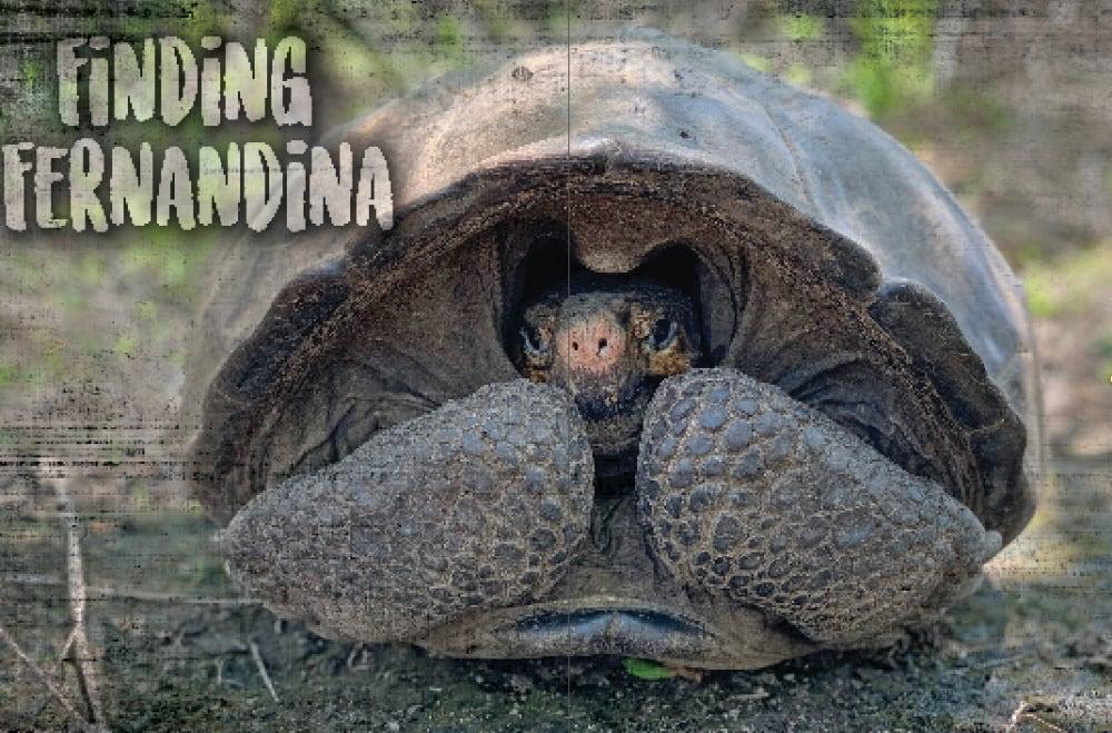 Finding The Fernandina Giant Tortoise