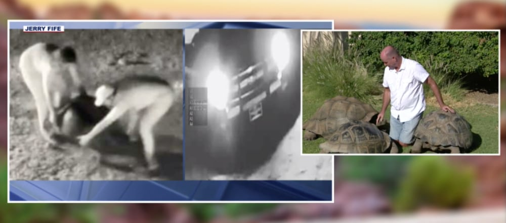 $13,000 Reward For Info Leading to Arrest And Conviction Galapagos Tortoise Killers