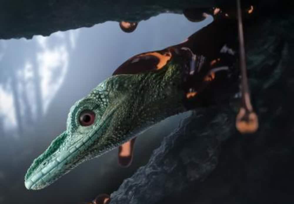 Reptile Described As Dinosaur Confirmed A Lizard