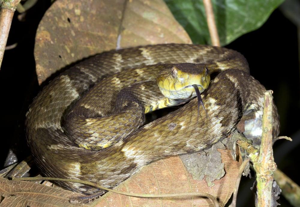 Snake Venom-Derived Super Glue Stops Bleeding In Seconds