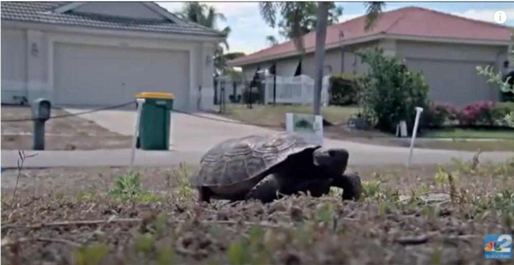 Florida Man Buys Land To Help Save Local Gopher Tortoise Population