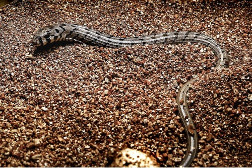 Two European Glass Lizards Hatch At Smithsonian's National Zoo