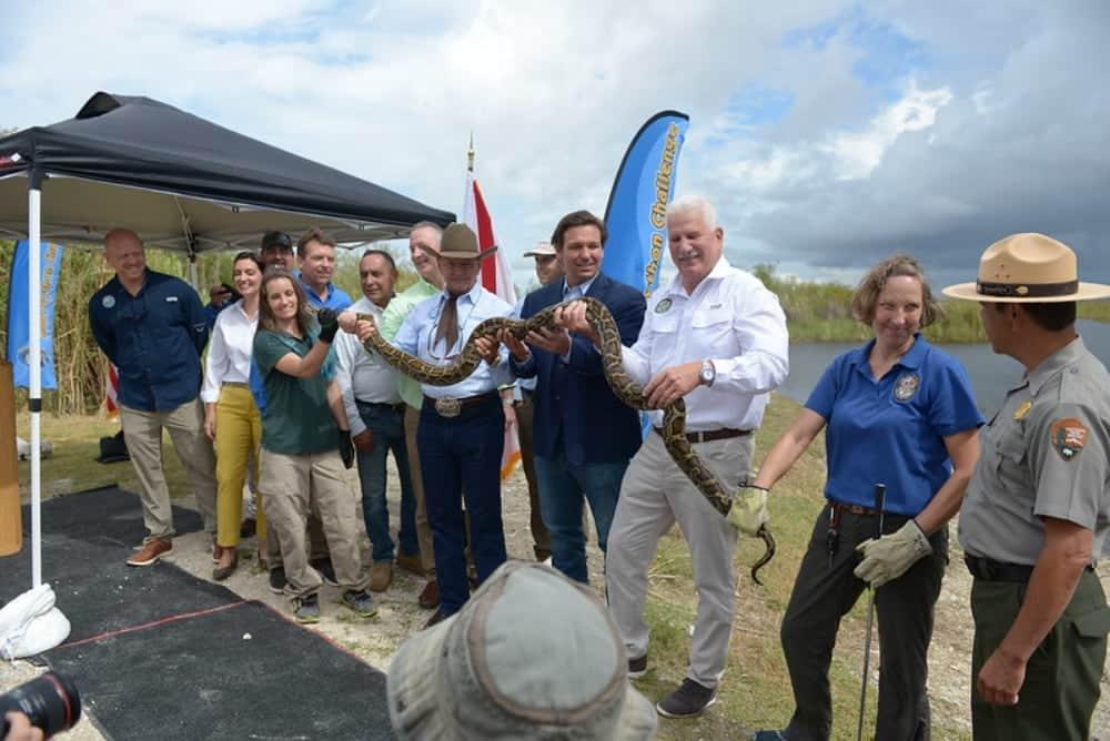 2021 Florida Python Challenge Nets 223 Snakes