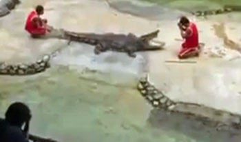 Video: Croc Nearly Makes A Meal Out Of Handler