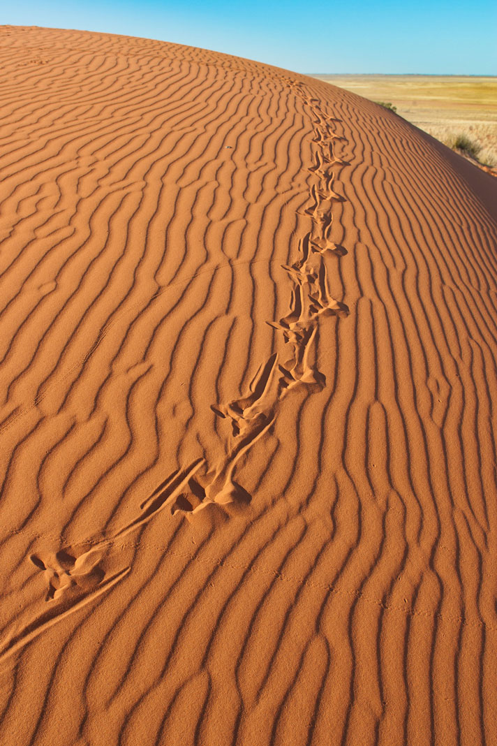 Reptile Tracks: Can You Tell What Species Made Them?