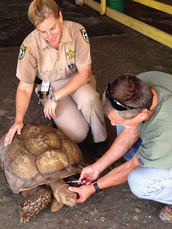 Reptile Medicine Behind Bars At The Monroe County Sheriff's Animal Farm