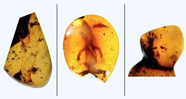 Researchers Detail Oldest and Most Diverse Lizard Paleofauna Encased in Amber