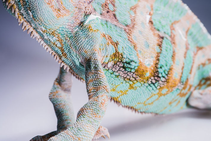 How To Use The Herpetofauna Disease Alert System (HDAS)