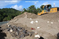 Leatherback Sea Turtle Hatchlings Crushed To Death In Trinidad And Tobago Erosion Mitigation Debacle