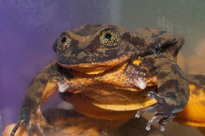 Romeo, The Last Frog Of His Species Seeks Mate Through Match.com