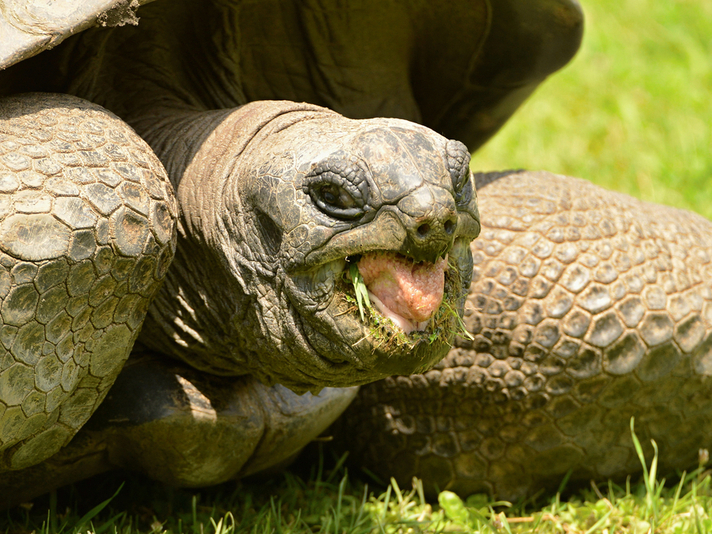 Aldabra Tortoise Care Sheet