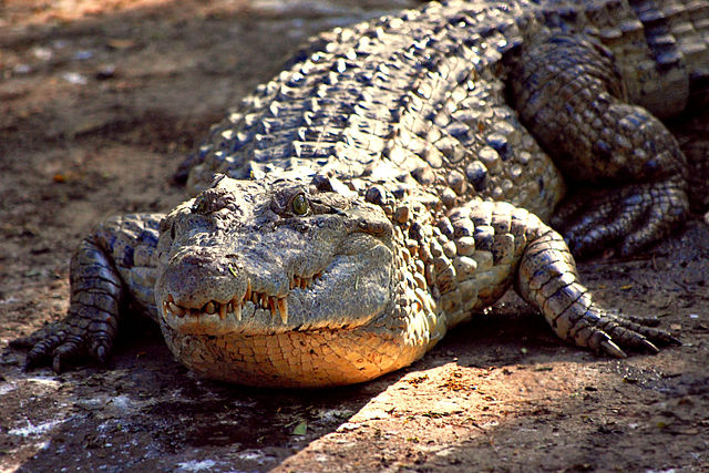 Critically Endangered Philippine Crocodile Killed After Biting Zookeeper In Switzerland