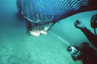 NOAA Suspends Planned Use Of Turtle Excluder Devices On Certain Shrimp Trawlers