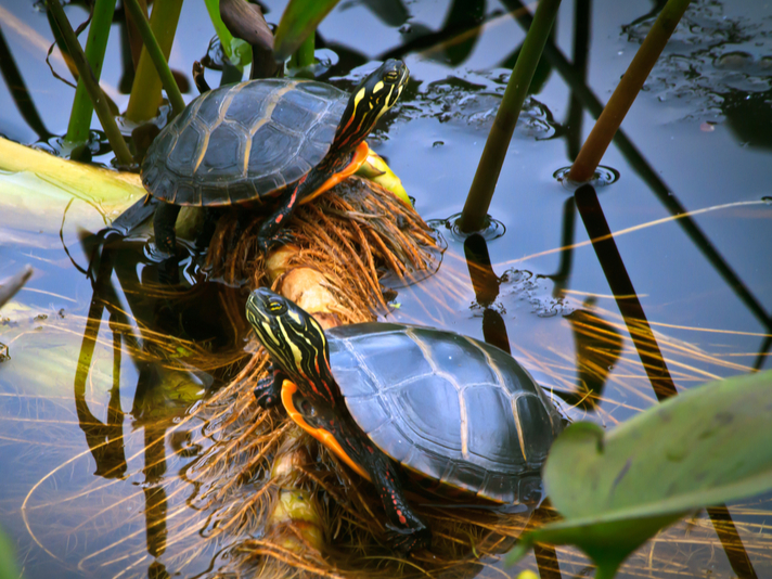 Build The Ultimate Turtle Pond