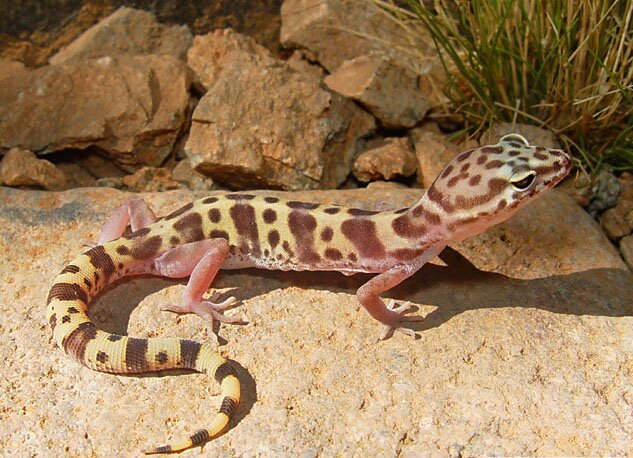 Utah Wants Feedback On Proposal To Ease Collection Of Wild Herps