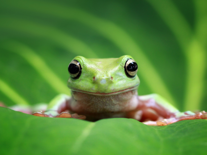 Herp Queries: What Is The Best Pet Frog?