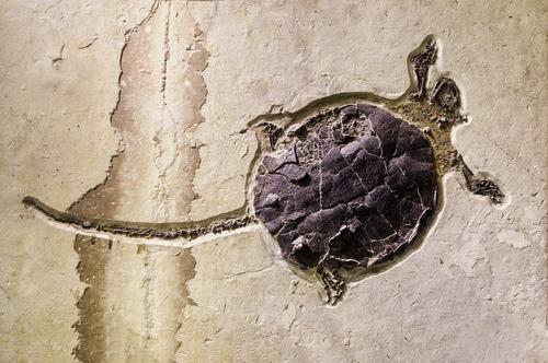 Extinct Reptiles and Amphibians