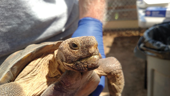 An Examination Of Tortoise Health Conditions