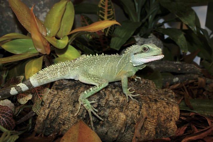 Factor Your Reptiles In Disaster Preparedness