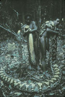 Scared Of Snakes? There May Be A Gene For That