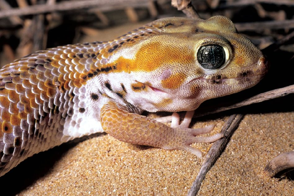 Researchers See Steady But Still Troublesome Decline In Reptile Poaching In Pakistan