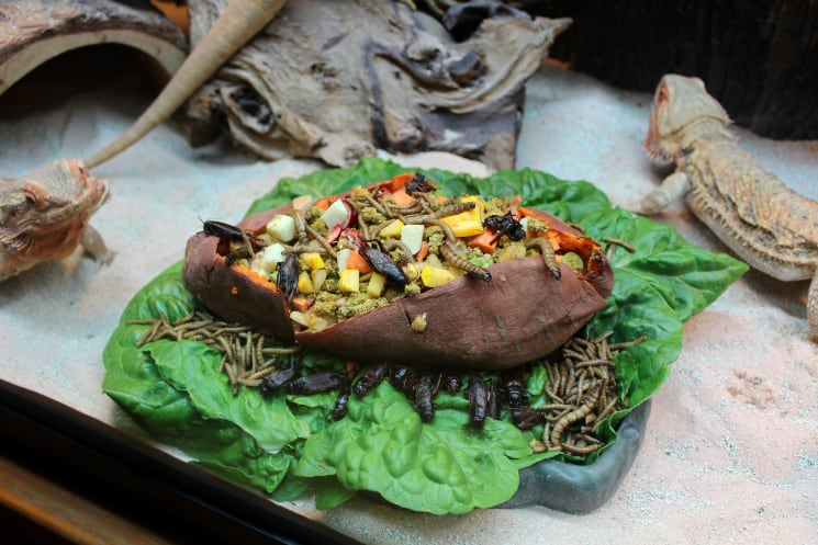 Gourmet Holiday Recipes For Your Reptiles