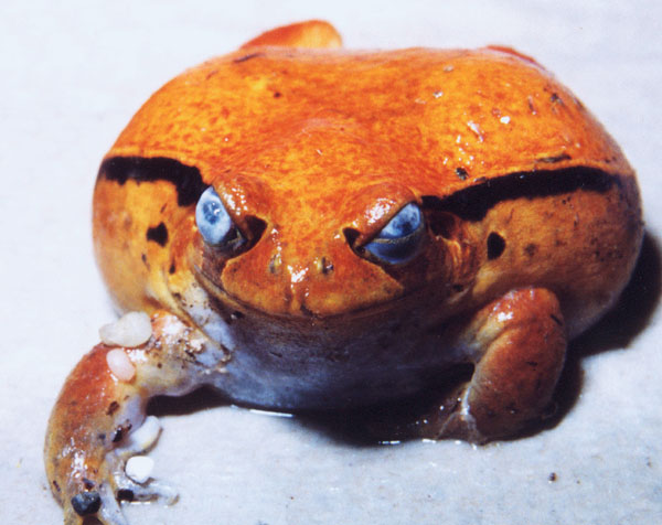 How To Recognize And Prevent Medical Ailments In Amphibians