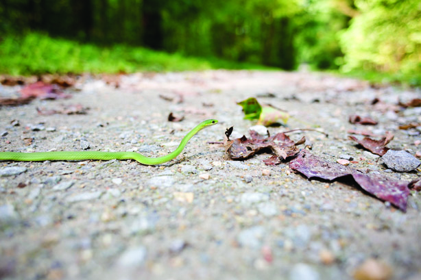 9 Days On Shawnee National Forest's Snake Road Of Illinois