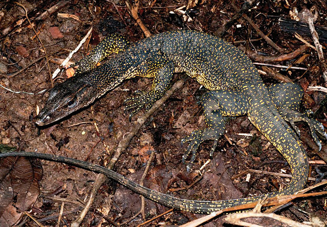 Florida Man Pleads Guilty To Trafficking Water Monitors From The Philippines