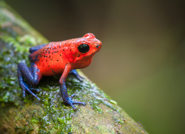 Poison Frogs: How Dangerous?