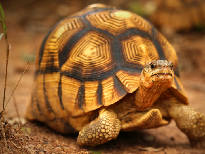 The Top 10 Reptiles Most Reliant on Zoo Breeding Programs for Survival