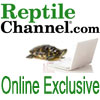 Cleaning Reptile Cages