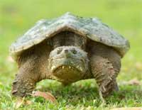 South Carolina Turtle Ban Proposal