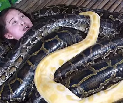 This Burmese Python Snake Massage Will Blow Your Mind