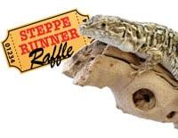 The Steppe Runner Lizard Raffle