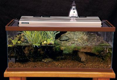 Reptile Enclosures and Set Ups