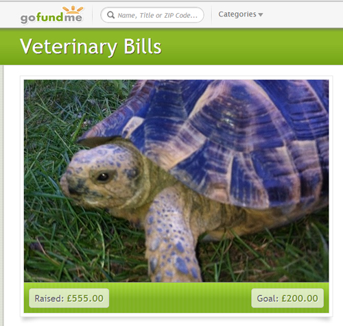 Tortoise In England Needs Penis Surgery, Owner Turns To Crowd Funding to Defray Costs
