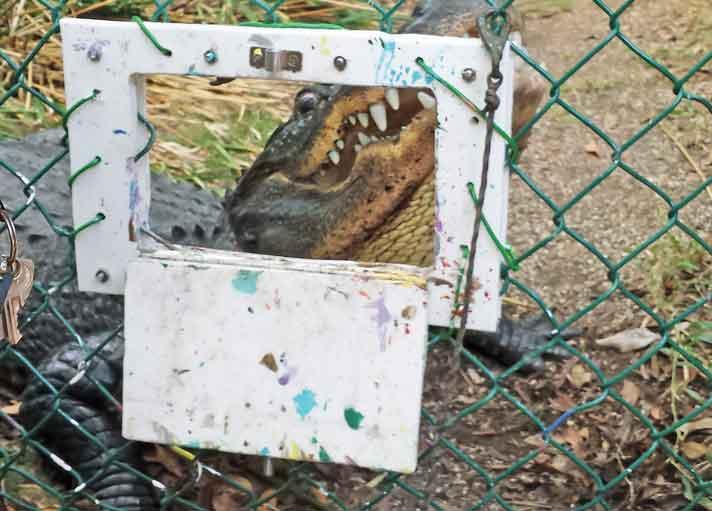 The Vet Report: Environmental Enrichment for Reptiles