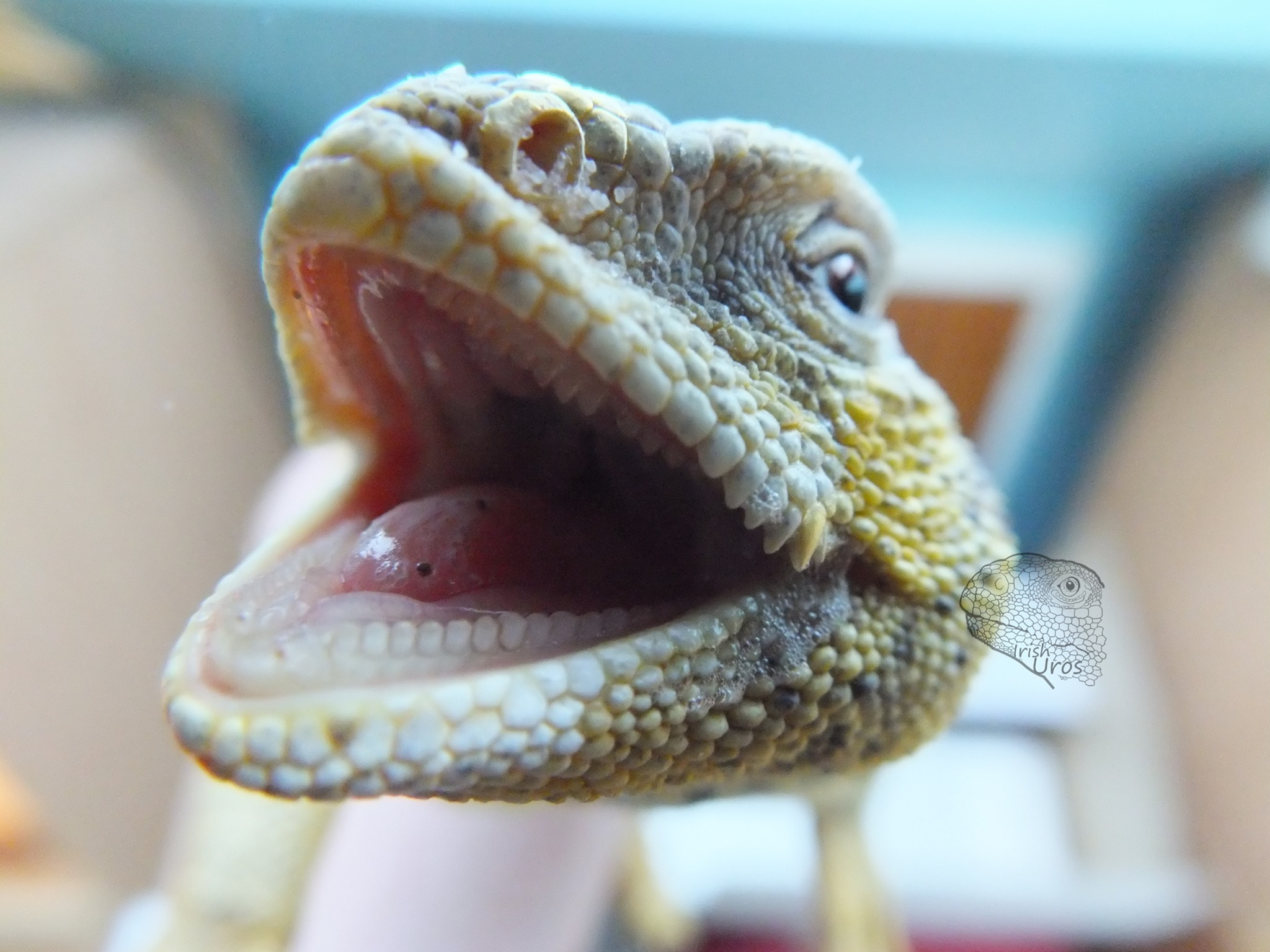 Reptile Dentition: The Details on Reptile Teeth