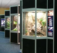 New Gecko Exhibit