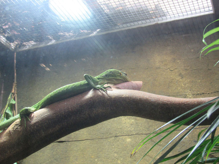 Ideal Heating For Your Reptiles