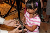 More Than 2300 Attend Reptile And Amphibian Appreciation Day At L.A.'s Natural History Museum