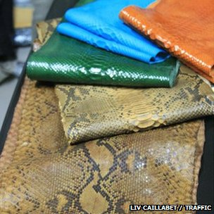Gucci Fashion Execs Attend CITES Conference To Drum Up Support For Python Skin Tracking